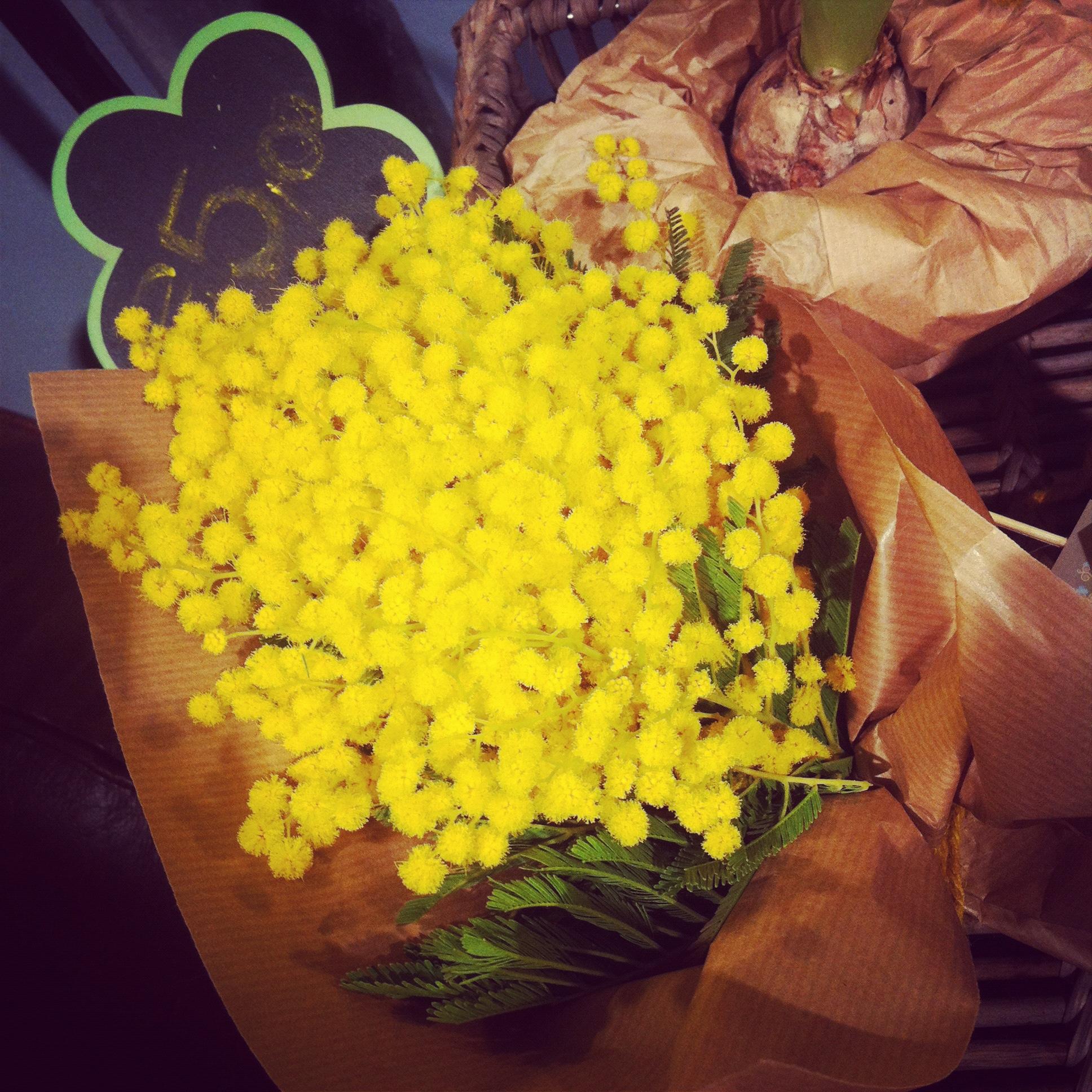 Mimosa for Festa della Donna